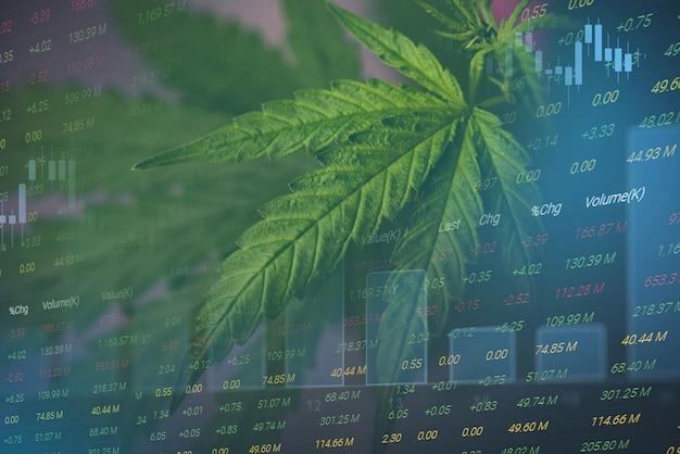 Negócio de cannabis com folhas de maconha e gráficos de ações sobre investimento de análise de negociação de bolsa de valores, finanças de maior valor comercial para remédios de maconha e tendências de aumento de lucro comercial