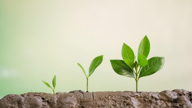 Negócios crescem, crescimento de plantas jovens