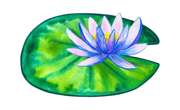 Nenúfar rosa azul na folha verde. mão-extraídas ilustração em aquarela. isolado.