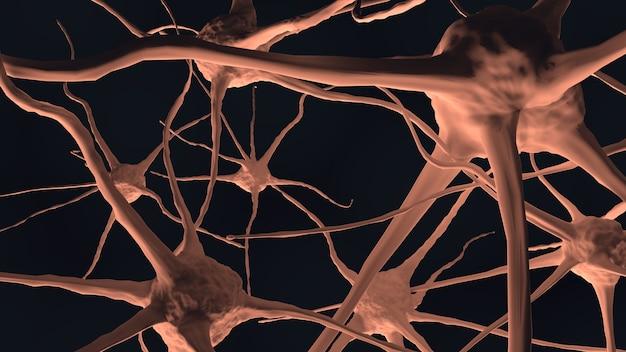 Nervo do cérebro humano no corpo