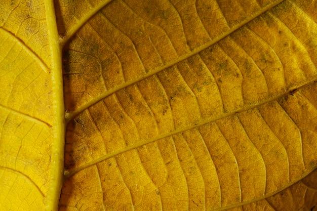Nervos de folha amarela em close-up
