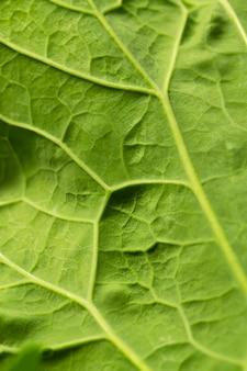 Nervos de folhas verdes em close-up