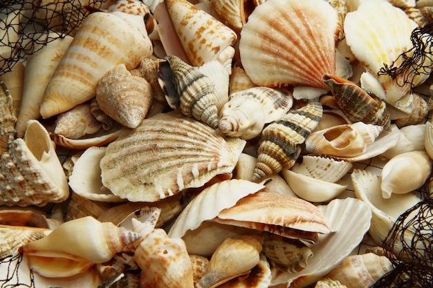 Net com vários shell do mar