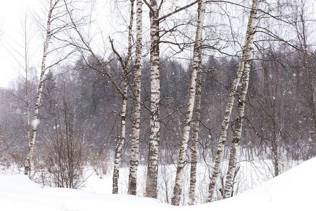 Nevando em uma floresta de inverno