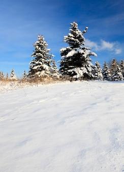 Neve branca caindo no chão no inverno