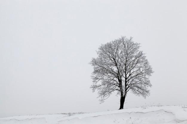 Neve caindo após a última nevasca. a foto foi tirada no inverno.