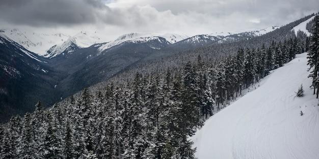 Neve coberta, árvores, com, alcance montanha, em, a, fundo, whistler, columbia britânica, canadá