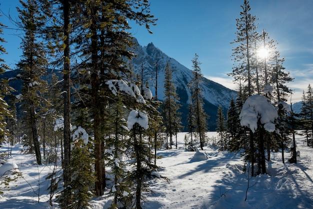 Neve coberta, árvores, com, montanha, em, inverno, lago esmeralda, campo, columbia britânica, canadá