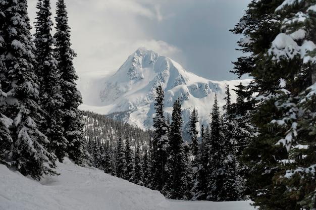 Neve coberta, árvores, com, montanhas, whistler, columbia britânica, canadá