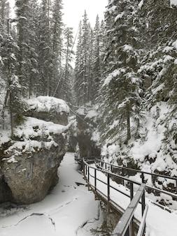 Neve coberta, árvores, com, rastro, em, floresta, canhão johnston, parque nacional banff, alberta, canadá
