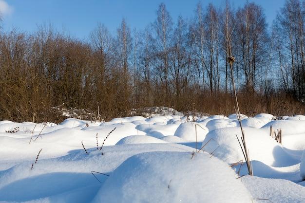 Neve congelada e fria no inverno, natureza após queda de neve e nevascas, montes de neve fofa no inverno