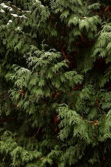 Neve de vista frontal na planta verde