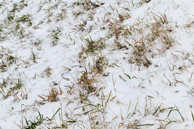 Neve deitada após a última queda de neve, a foto foi tirada no inverno
