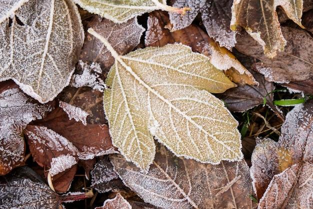 Neve e geada nas folhas de outono. conceito de inverno