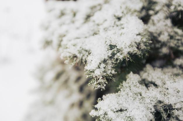 Neve em uma árvore de abeto