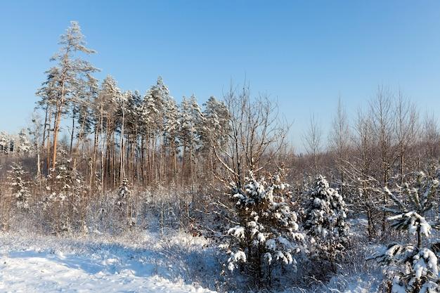Neve fotografada no inverno, que apareceu após uma nevasca. fechar-se,