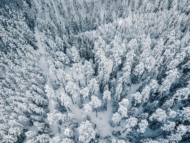 Neve fresca cobrindo bosques do parque nacional - foto aérea de drone de cima para baixo