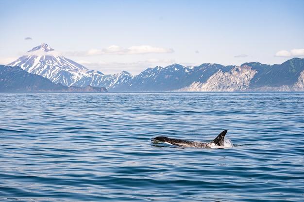 Névoa atrás do oceano com orca flutuante