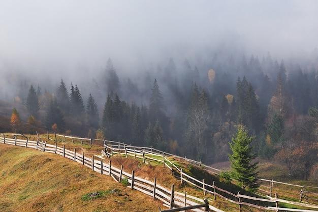 Névoa da manhã linda e raios solares na encosta da montanha na floresta de pinheiros de outono.