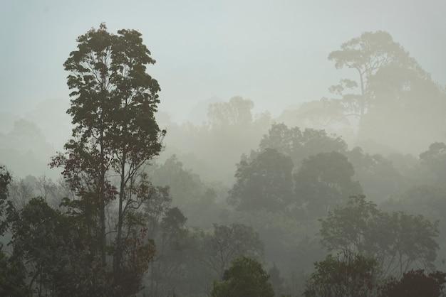 Névoa da manhã na floresta tropical densa, tailândia