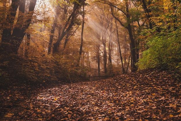 Névoa da manhã na floresta