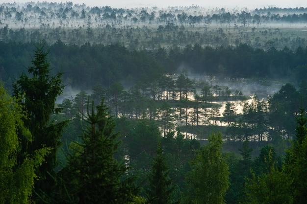 Névoa da manhã permanece sobre pântano