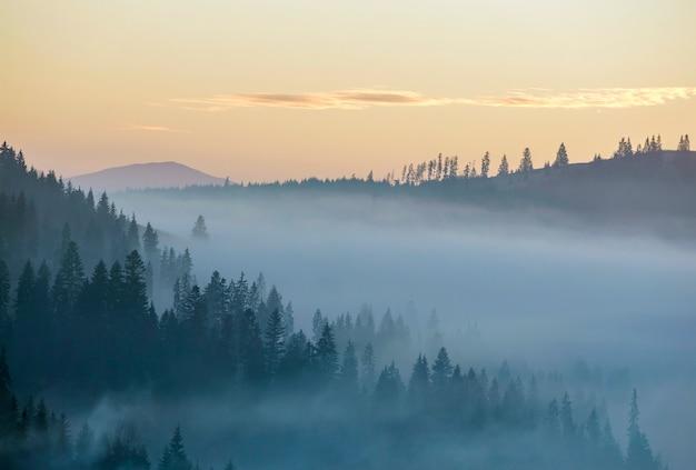 Névoa da manhã sobre colinas de montanha cobertas com densa floresta de abetos