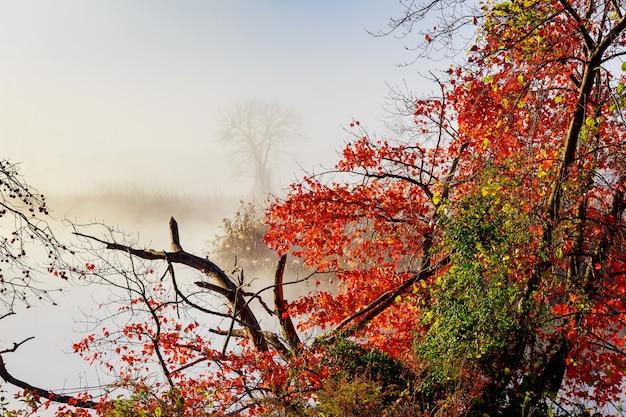 Névoa da manhã sobre o rio no outono