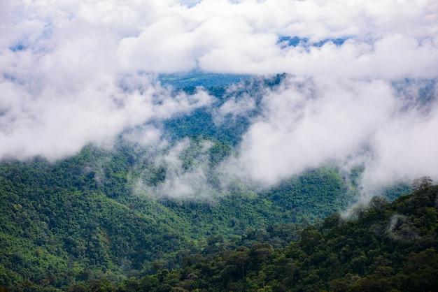 Névoa da montanha cênica em thongphaphum