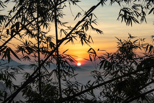 Névoa e sol atrás de árvores de bambu.