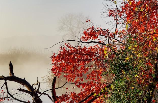Névoa matinal no lago paisagem pacífica com nevoeiro matinal começando a queimar nesta paisagem calma e pacífica do lago
