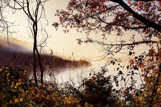 Névoa matinal sobre o rio no outono nevoeiro matinal no outono