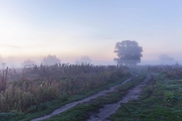 Névoa matinalo caminho amanhecer nevoeiro matinal ao ar livre na vista da floresta com o nascer do sol nebuloso