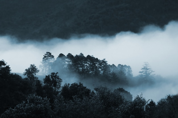 Névoa na floresta profunda, tailândia