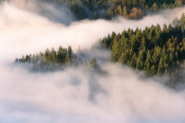 Névoa no vale da floresta negra ao pôr do sol
