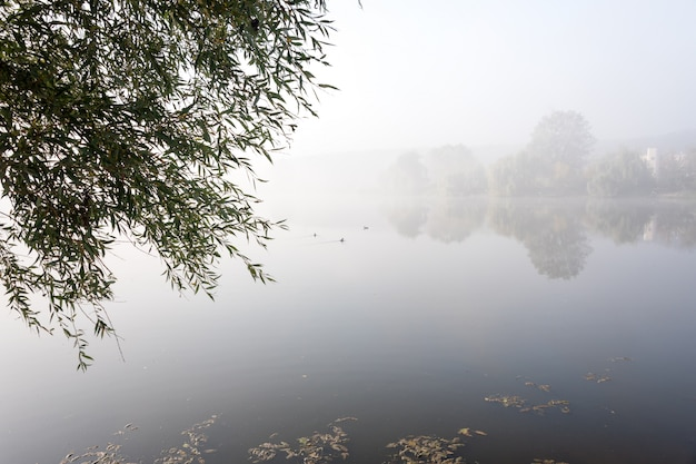 Névoa sobre o lago com reflexo na água