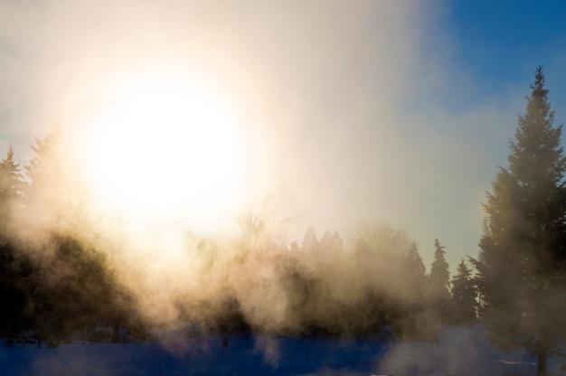 Nevoeiro da noite na floresta