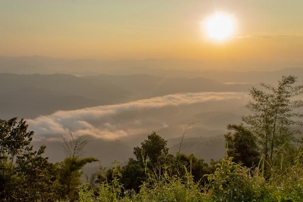 Nevoeiro e sol manhã após a montanha no phu soi dao national park.