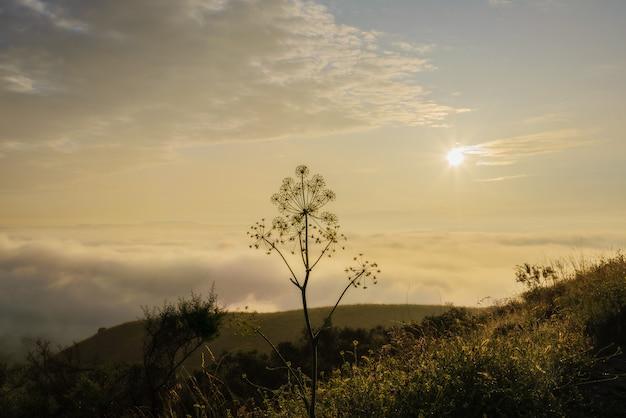Nevoeiro e sol