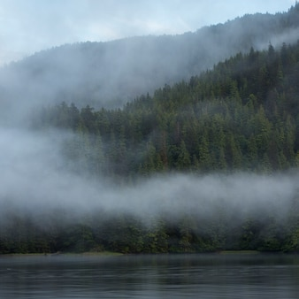 Nevoeiro, em, costa, skeena-queen, charlotte, distrito regional, haida, gwaii, graham, ilha, columbia britânica