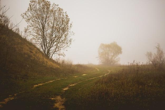 Nevoeiro espesso por manhã. estrada terrestre em terreno desértico