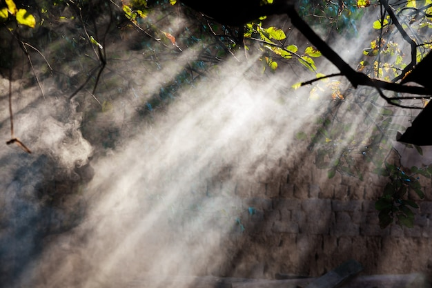 Nevoeiro na floresta contra o sol nevoeiro floresta contra o raio de sol