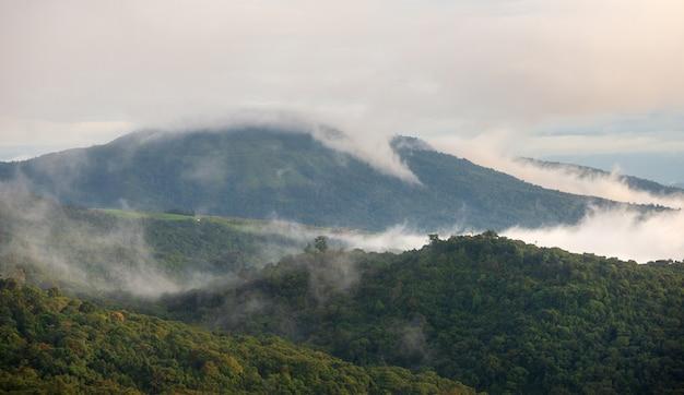 Nevoeiro na floresta e montanhas