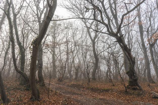 Nevoeiro na floresta