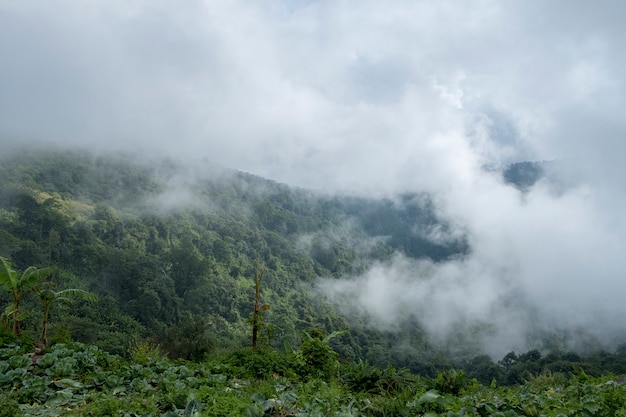 Nevoeiro na montanha da floresta, tailândia