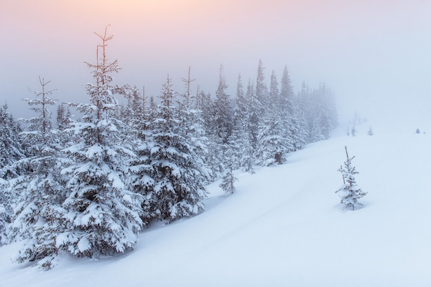 Nevoeiro nas montanhas de inverno. pôr do sol fantástico
