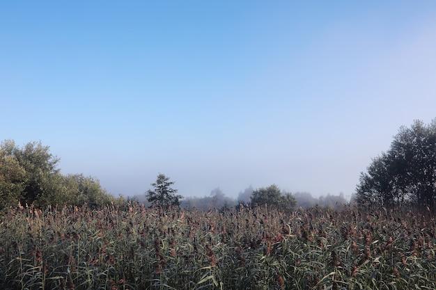 Nevoeiro no lago. água da natureza da manhã e névoa branca.