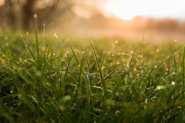 Nevoeiro no parque de manhã. nascer do sol com nevoeiro na floresta. paisagem de beleza