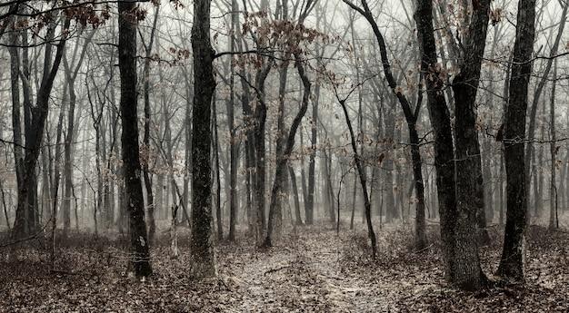 Nevoeiro preto e branco em uma floresta bonita floresta de coníferas ao amanhecer