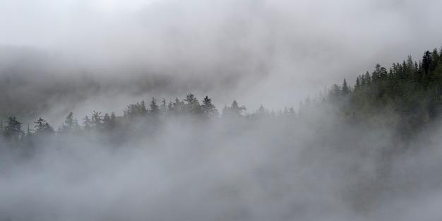 Nevoeiro, sobre, árvores, skeena-queen, charlotte, regional, distrito, haida, gwaii, graham, ilha, britânico, columbia
